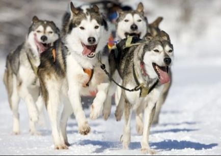 COVID 19 bringt die Hunde-Center in Finnlnd in Bedrängnis